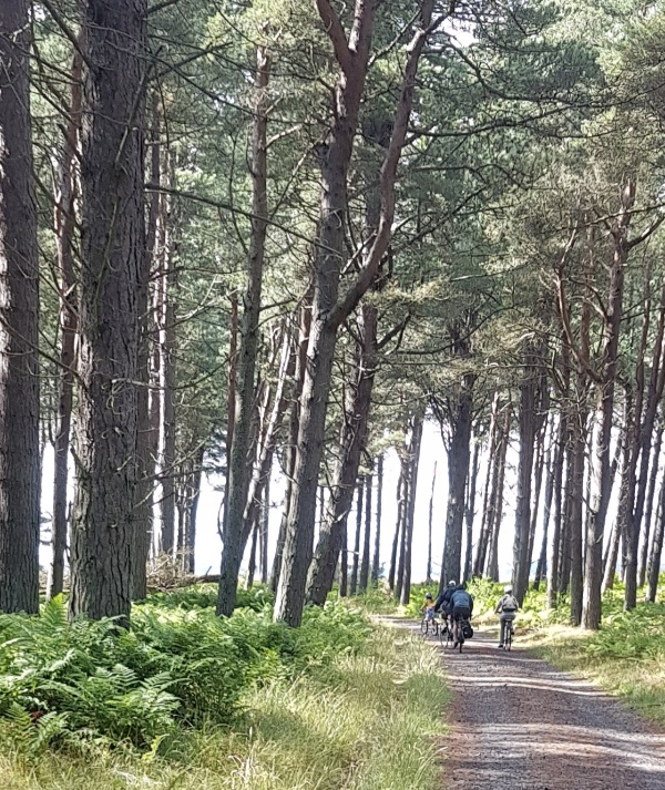 A phot of a family cycling in Tentsmuir