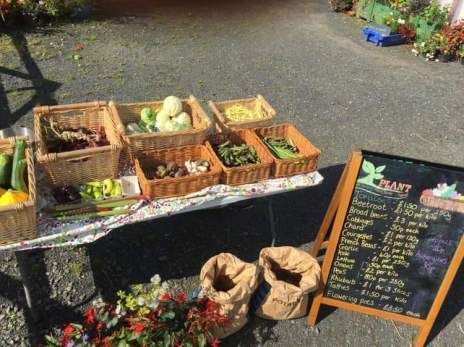 PLANT stall at the garden gate