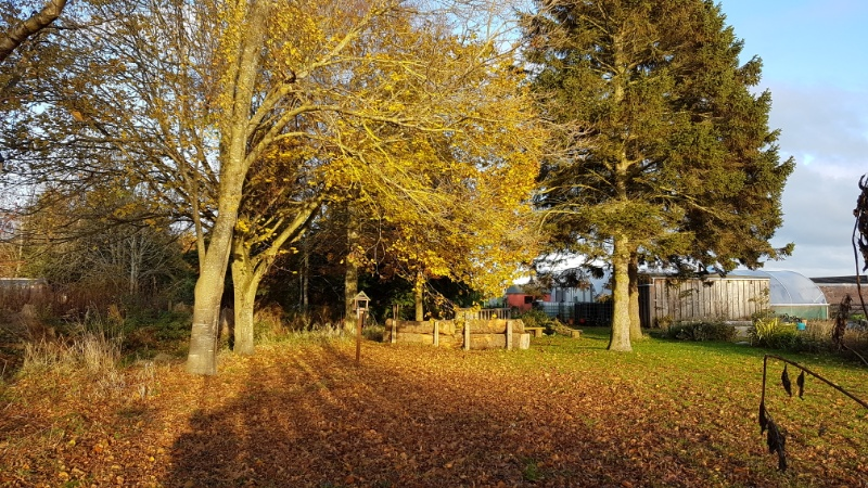A photo of Community Garden in autumn