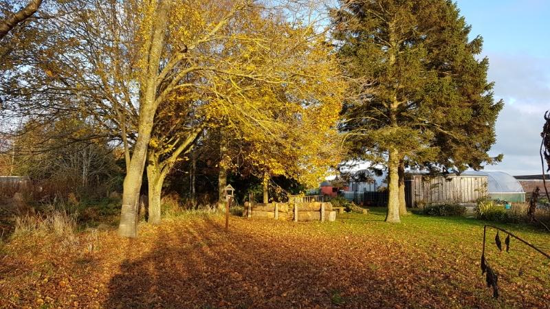 A photo of Community Garden in autumn