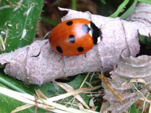 Gardening for wildlife - Workshop and Q&A