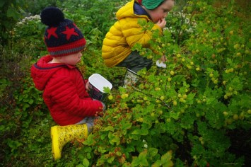 Kids eating berries at the Fruit Tree Walk