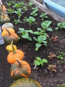 Peter's October gardening update