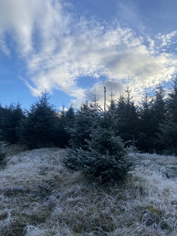 Katrino's winter blog