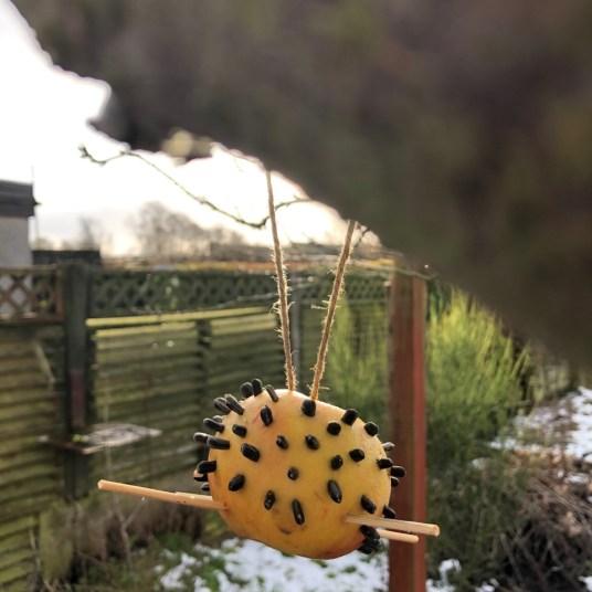 hanging apple birdfeeder