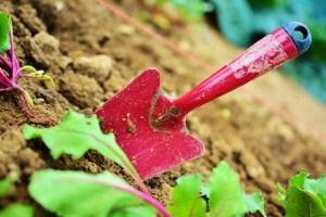 Basic gardening skills @ Tayport Community Garden