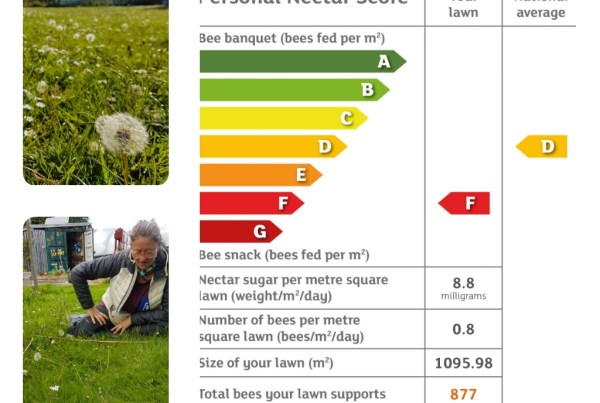 results of everyflowercounts survey in Tayport Community Gardens