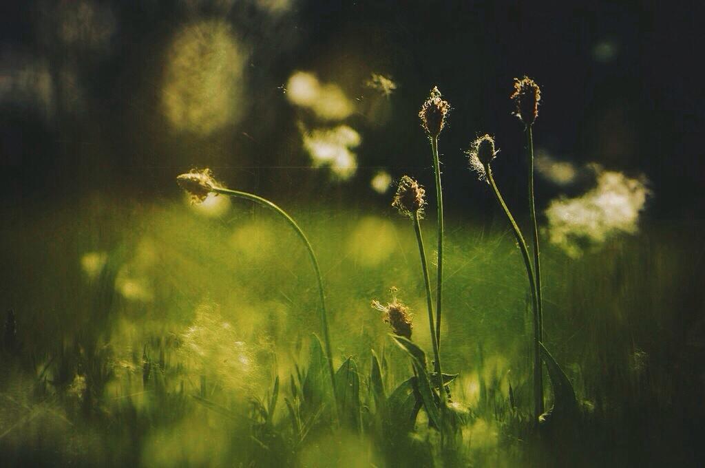Regen lässt das Gras wachsen