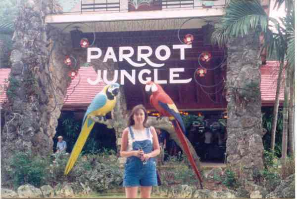 Tammy Parrot Jungle
