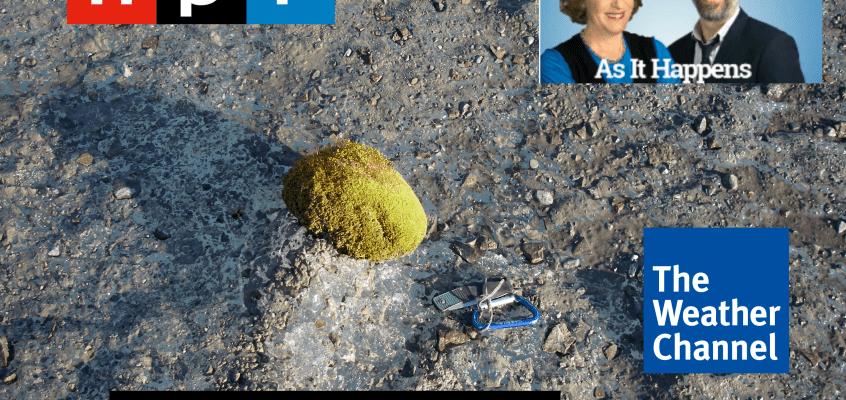 Moss ball with media logos