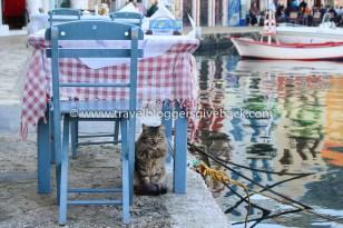 18 - Kastelorizo, Kreikka Kotona kaikkialla Kastelorizo, Kreikka: Kreikalle kuuluva Kastelórizon saari sijaitsee aivan Turkin edustalla, joten sinne oli helppo tehdä veneretki Kaşista. Hurmaavalla pikkusaarella meitä oli vastassa veikeitä merikilpikonnia, notkuvia herkkupöytiä sekä lukemattomia seurallisia kissoja. Myynnissä myös valmiina tauluna!