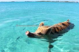 38 - Bahama Stilettikorkokanta Bahama: Bahamalta löytyy autio saari, jota asuttaa maailmankuulut uivat possut. Ollessani työharjoittelussa pienlentokoneyhtiössä Floridassa, pääsin lentoretkelle Bahamalle näkemään nämä kaverit, jotka elävät villinä paratiisisaarellaan. Matka tähän vaikeasti saavutettavaan kolkkaan on jäänyt mieleen ehkä unohtumattomimpana kaikista reissuistani.