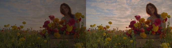 Flowerfield-Standard left-New Dolby Imaging Tech right