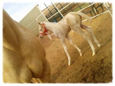 Fancy's Foal