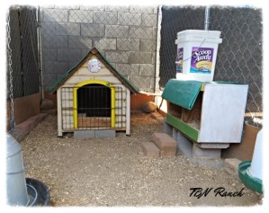 Brooder Coop Interior