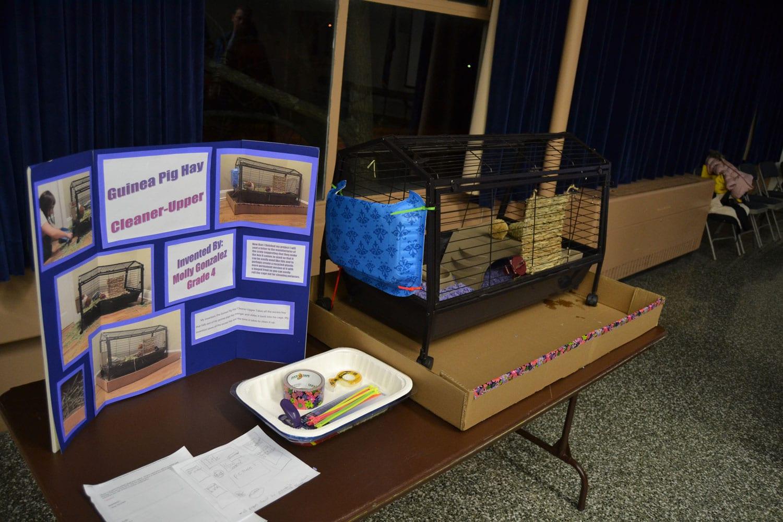 Guinea Pig School Project