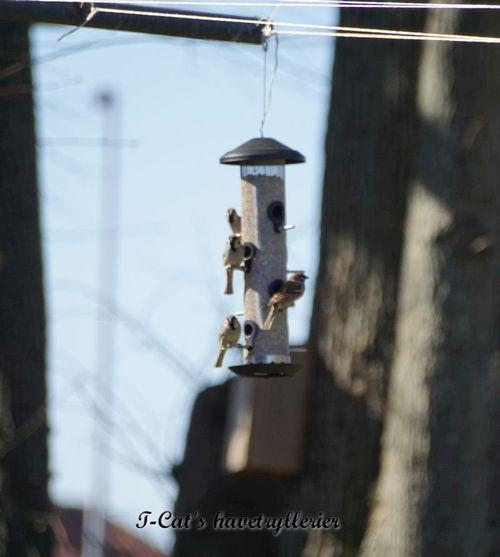 Wildlife World foderautomat til fuglefrø - stor