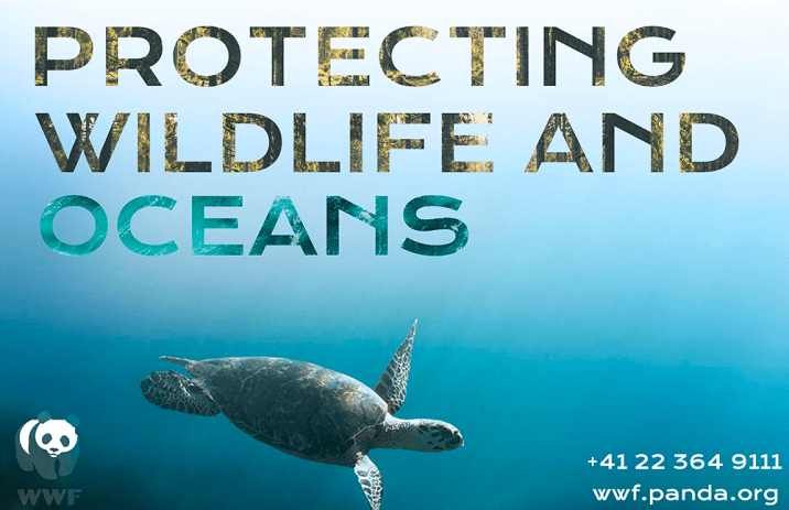 Sierra Philips' Protecting Wildlife and Oceans Ad