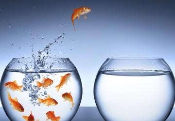 Entreprendre - le petit poisson rouge