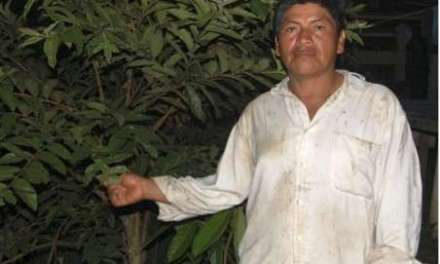 Fulbright scholar interviews guayusa tea farmer
