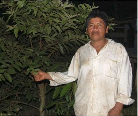 Fulbright scholar interviews guayusa tea farmer