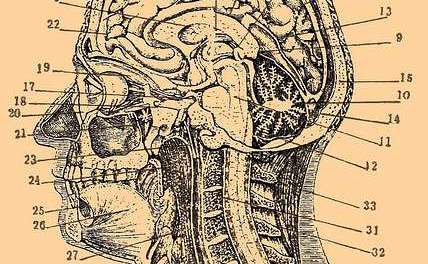 Spirituali-tea: The mind / body connection