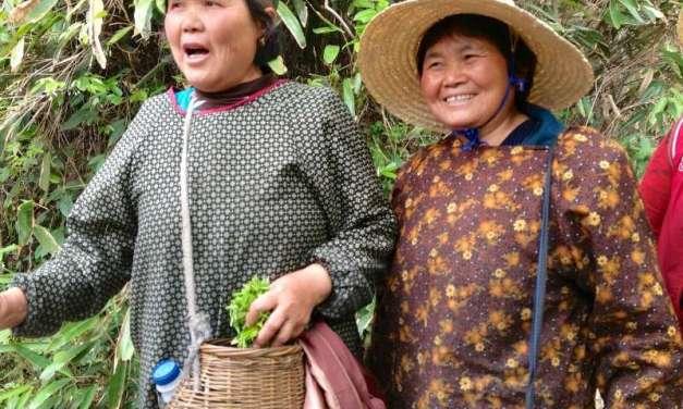 Tea pesticides and the sustainable future