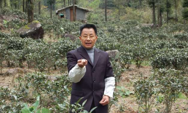 Does all tea really come from the same plant?
