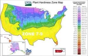 usda zone 7-9