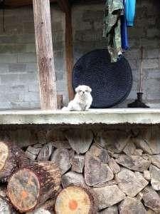Wood-+-dog-225x300