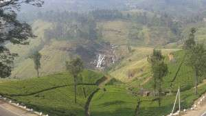 fading tea field elyse
