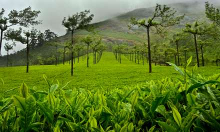 The Mesmerising Tea Gardens of Munnar