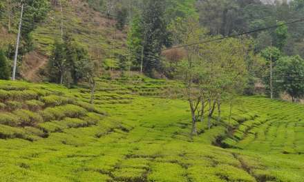 Narendra Kumar Gurung on Developing Local Tea Production in Nepal – Part 1