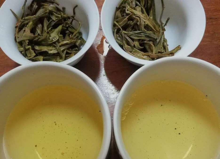 Combined Tea Sample Tasting – Part 3