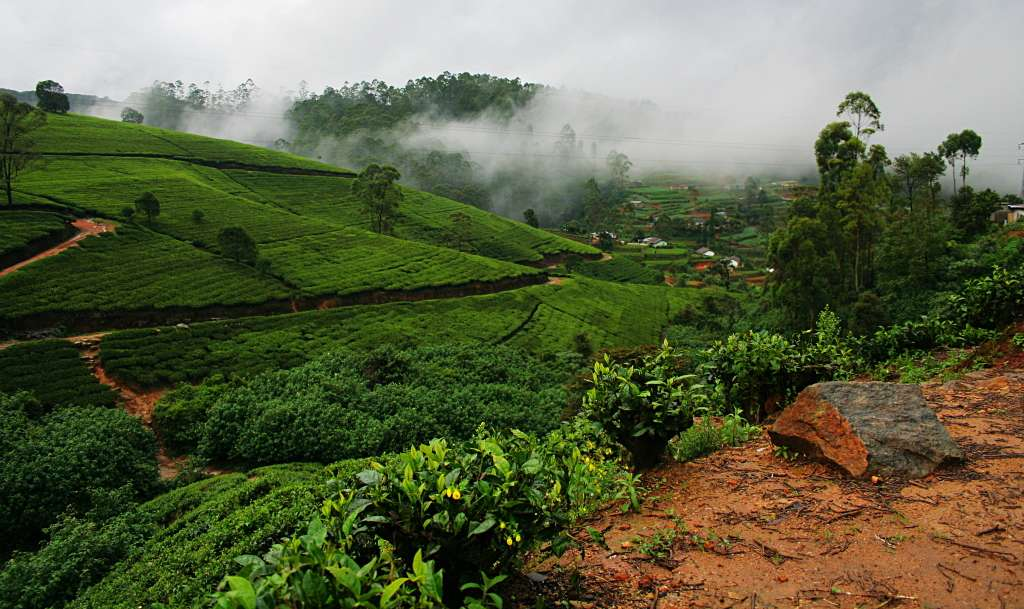 Tuesdays With Norwood, Re-Steeped: Sri Lanka (Ceylon), Dimbulla, Nuwara Eliya