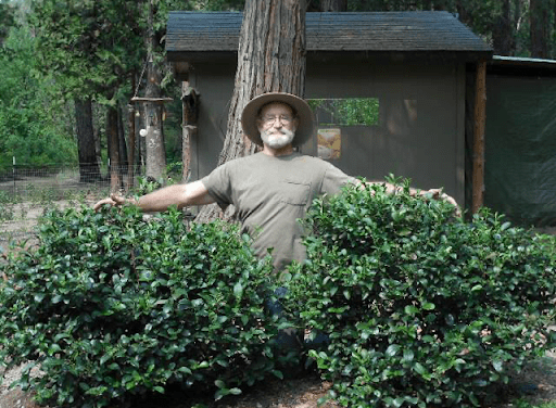What Is the Value of an American Tea Farm?