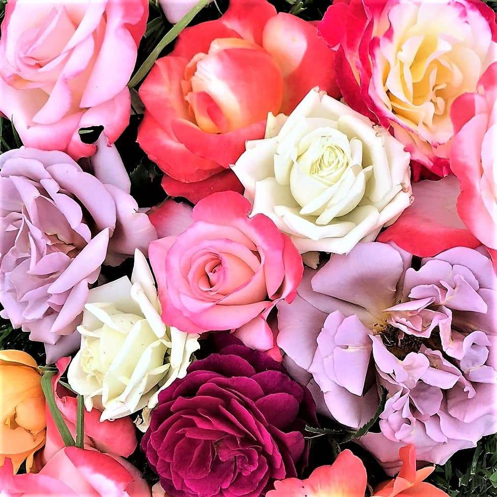 Random Acts of Kindness - Photo of roses
