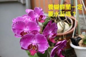 佩珊老師養蘭隨筆-蝴蝶蘭