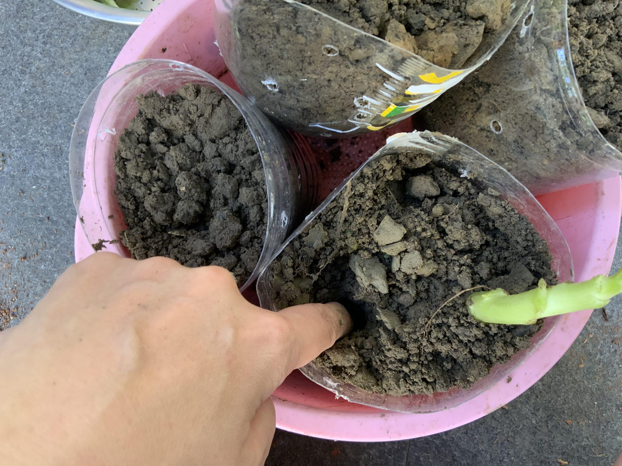 環保愛地球寶特瓶回收 種菜日記 青江菜