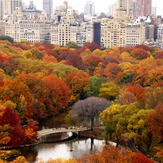 Central Park In Fall Wallpaper Bridging The Nature Culture Divide Ii Stewardship Of