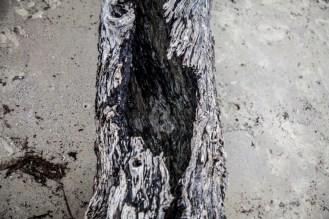 Jekyll Driftwood 23