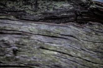 Jekyll Driftwood 29