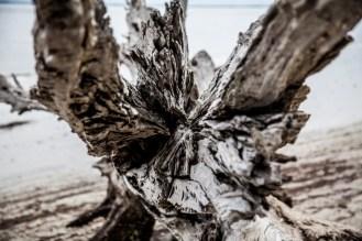 Jekyll Driftwood 31