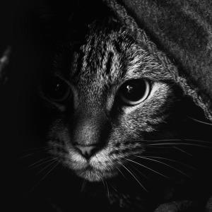 車 猫 対策 1