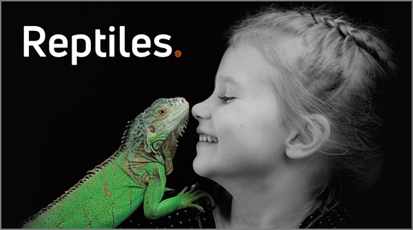 Cabecera Reptiles +KOTA TD2