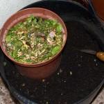Compost casero
