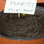 Siembra de tomates