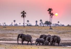 Elephant Herd 4