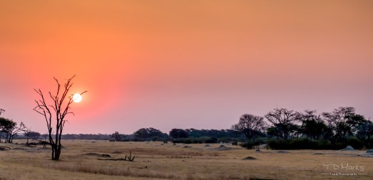 Hwange (The Hide 1)