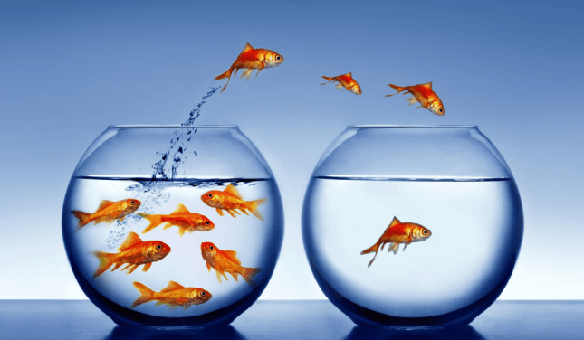 fish_jumping_out_of_bowl-other1